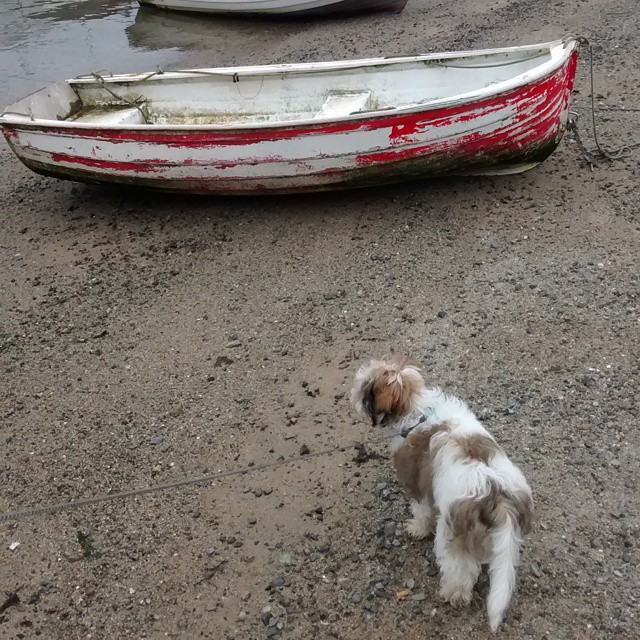 puppy dog on the beach saltash cornwall boat