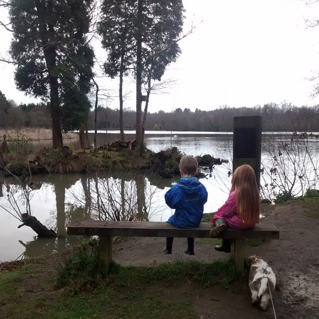Taking the puppy for his first ever walk Stover Devon…