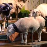 The Big Sheep North Devon