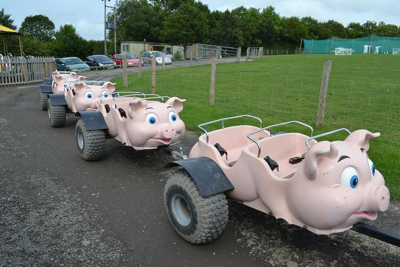 Pulling the pigs at big sheep devon