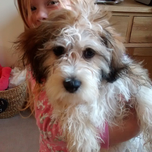 Someone has just had a bath and is very cross!!…