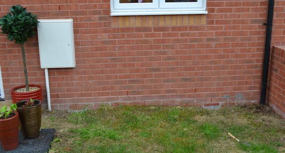 Dobies of Devon Plug Plants Review.