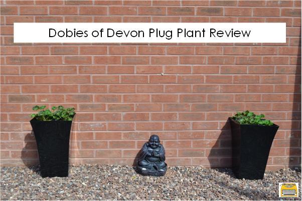 Dobies of Devon plug plant review